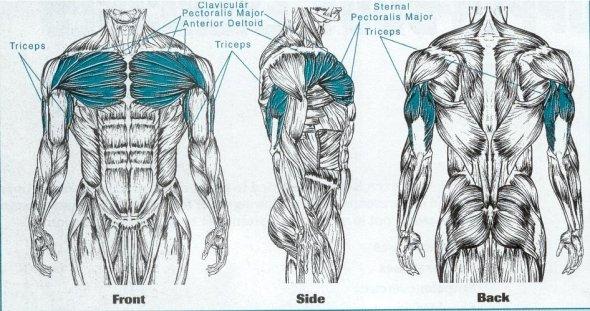 Cum să pierzi grăsimea superioară a corpului. 2. Antrenez tot corpul în fiecare antrenament?